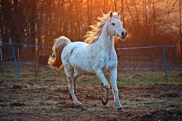 horse 2063672 640 1